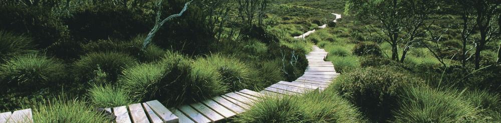 ecoturismo ecologico