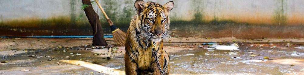 importancia del ecoturismo para los animales