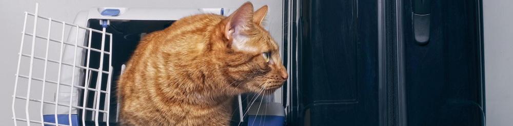 viajar con mascotas gatos