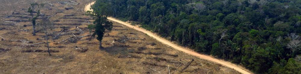 Amazonas en Riesgo de Extinción