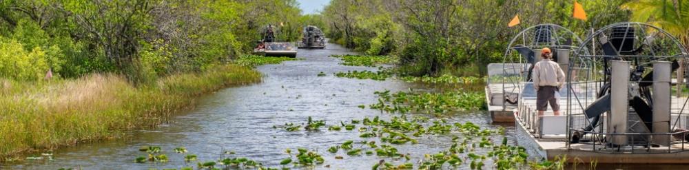 Florida Everglades en Riesgo de Extinción
