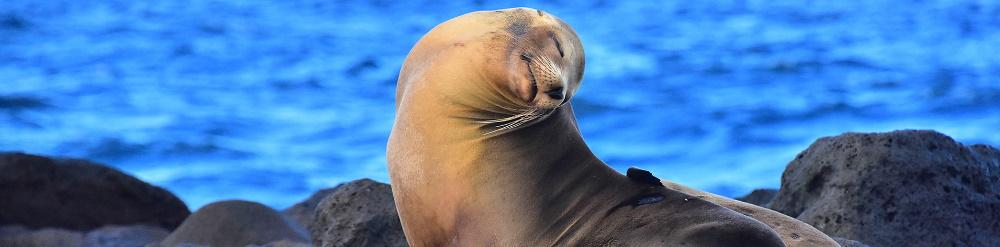 Islas Galápagos en Peligro de Extinción