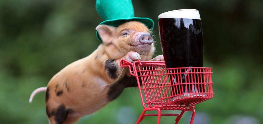 cerdo gracioso nomada digital