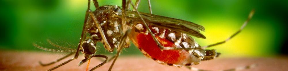 vacuna dengue