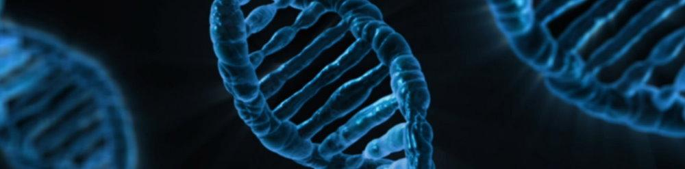 DRD4-7R gen wanderlust